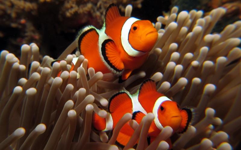 六个检疫观赏海水鱼的方法